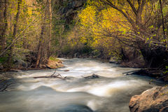 Rusa skogfloden Arkivfoton