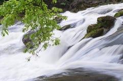 Rusa strömfloden Fotografering för Bildbyråer