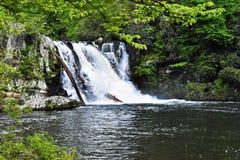 Rusa vattenfallet Royaltyfria Foton