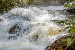 Rusa vattenfallet som förlägger glödande daggdroppar på ett litet, sörja trädet i Rocky Mountain National Park arkivfoto