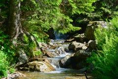 Ruscello Alpino. Piccolo corso d'acqua in montagna Stock Images