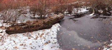 Ruscello congelato Fotografia Stock