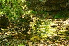 Ruscello dell'Ohio S.U.A. della gola di Clifton al lato dell'albero in foresta fotografia stock