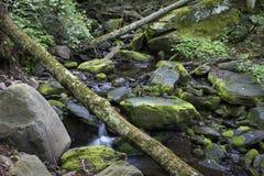 Ruscello della montagna di Catskill ed alberi caduti fotografia stock