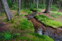 Ruscello in foresta con i moos fotografia stock libera da diritti
