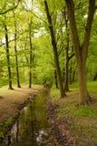 Ruscello fra gli alberi Immagini Stock