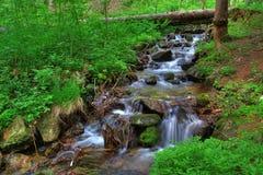 Ruscello nella foresta Fotografia Stock Libera da Diritti