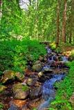 Ruscello nella foresta Immagini Stock Libere da Diritti