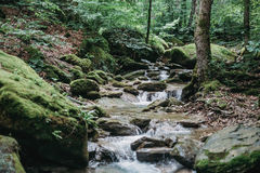 Ruscello nella foresta di estate Immagini Stock Libere da Diritti