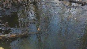 Ruscello in primavera stock footage