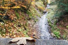 Ruscello in un burrone di autunno Immagini Stock Libere da Diritti