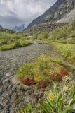Ruscello in valle di Akkem Montagna di Altai La Russia Immagini Stock Libere da Diritti