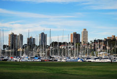 Rushcutters Bay Park skyline, Sydney, Australia. Rushcutters Bay Park skyline in Sydney, Australia Stock Photography