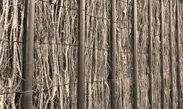 rushe загородки Стоковая Фотография