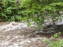 Rushing Rapid Water from Flash Flood in Stream. Rushing flash flood water in a stream with damaged tree branches hanging over the water royalty free stock photos