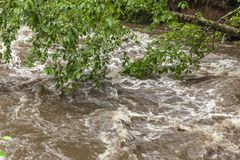 Rushing Rapid Water from Flash Flood in Stream. Rushing flash flood water in a stream with damaged tree branches hanging over the water stock image