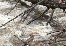 Rushing Water from Flash Flood in Stream. Rushing flash flood water in a stream with fallen trees and branches from heavy rainfall stock photo