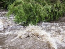 Rushing Rapid Water from Flash Flood in Stream. Rushing flash flood water in a stream with fallen trees and debris from heavy rainfall and weather damage royalty free stock photography
