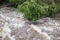 Rushing Rapid Water from Flash Flood in Stream. Rushing flash flood water in a stream with fallen trees and debris from heavy rainfall and weather damage royalty free stock photo