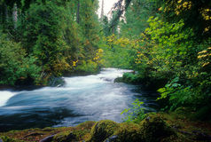 Rushing McKenzie River Royalty Free Stock Image