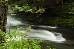 Rushing Mountain Stream, Whistler, British Columbi Royalty Free Stock Photo
