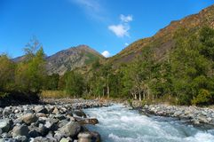 Rushing river. Altay Royalty Free Stock Image