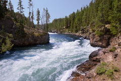 Rushing river in Yellowstone National Park Royalty Free Stock Images