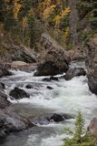 RUSHING ROCKY RIVER IN FALL. With rocks and fallen trees and fall forrest in background Stock Images