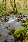 Rushing stream. Cascading stream in Scots Pine forest Stock Photos