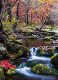 Rushing Stream in the Autumn Stock Photography