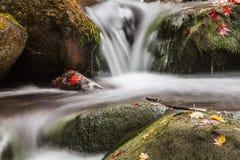 Rushing Stream in the Autumn Stock Photos