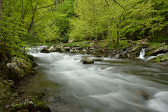 Rushing stream through forest. Stock Images