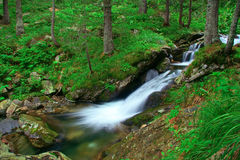 Rushing Stream In National Park Rila Stock Photos