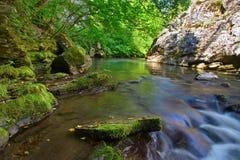 Rushing stream through the woods Stock Photo