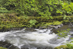 Rushing Water at Cedar Creek Washington State Royalty Free Stock Image
