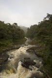 Rushing water through the jungle Stock Image