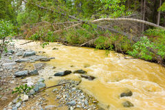 Rushing water muddied by placer mining in northern canada Royalty Free Stock Images