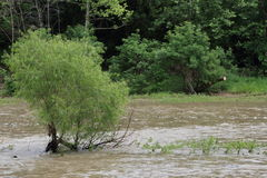 Rushing Waters Surrounding A Small Tree Stock Image