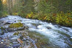 Rushing waters of unspoiled Wilderness Creek. Rushing waters of an Wilderness Creek running through a beautiful old growth forest Royalty Free Stock Photo