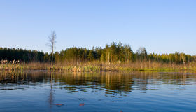 Rushy Swamp In Forest Landscape Stock Photos