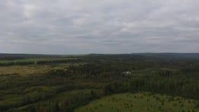 Rusia, distrito federal de Ural, verano en el bosque almacen de video
