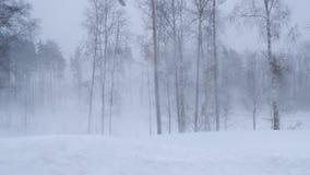 Rusia, febrero de 2019: ventisca y derivas grandes Un fuerte viento sacude los árboles en el bosque del invierno almacen de video