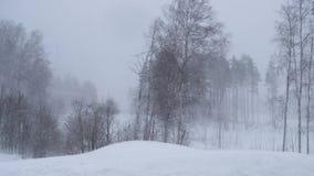 Rusia, febrero de 2019: ventisca y derivas grandes Un fuerte viento sacude los árboles en el bosque del invierno almacen de metraje de vídeo