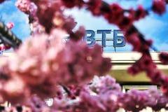 Rusia, Moscú - 30 de abril de 2018 Logotipo del banco de VTB visto a través de las flores de un cerezo decorativo en la calle de  Foto de archivo libre de regalías