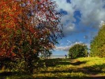 Rusia, St Petersburg, otoño en el parque de Gatchina Imágenes de archivo libres de regalías