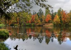 Rusia, St Petersburg, otoño en el parque de Gatchina Fotos de archivo