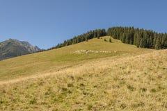 Rusinowa Polana - Tatra mountains, Poland. Royalty Free Stock Image