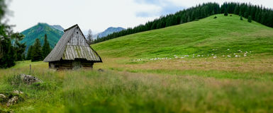 Rusinowa Polana, Tatry, Poland Stock Images