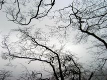 Ruskig prydnad av flätade ihop filialer av krökt trä krumelur Arkivfoton