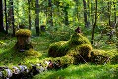 Rusland. Aard en het bos. Stock Fotografie
